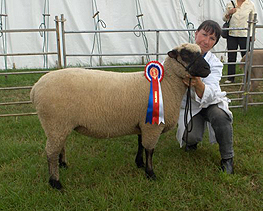 Anne Harvey and the Champion Shropshire at Cheshire Show 2007