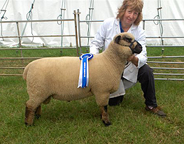 Alison Schofield and the Reserve Champion Shropshire at Cheshire Show 2007