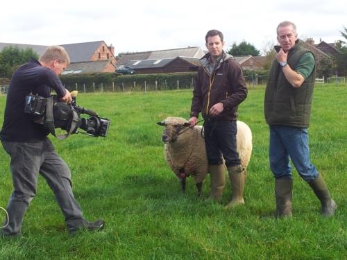 Shropshire sheep, BBC Countryfile
