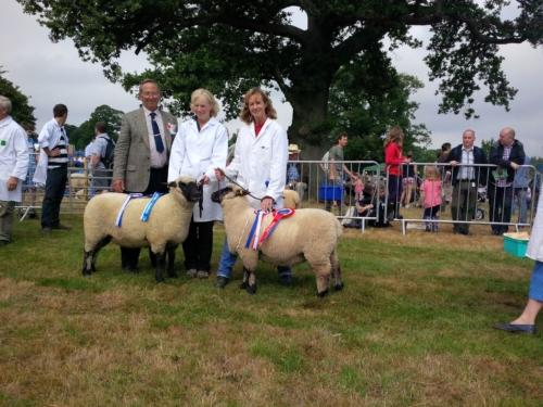 Shropshire Sheep, Burwarton Show
