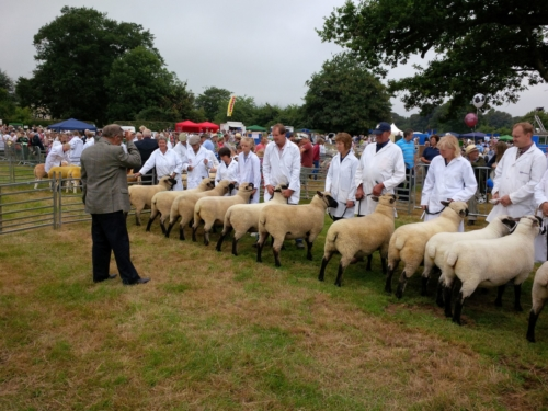 Shropshire sheep at Burwarton Show