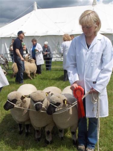 Shropshire Sheep, Cheshire Show