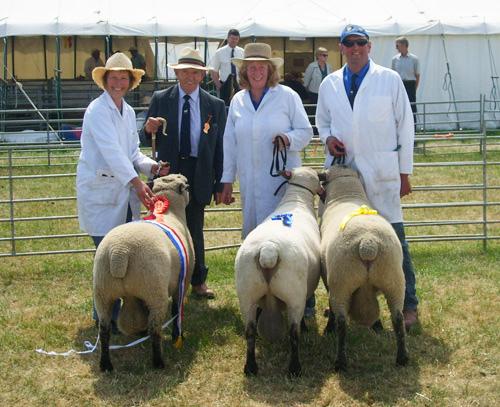 Alderton lambs at Cheshire Show