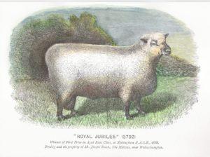 Shropshire Sheep, Shropshire ram, Shropshire history, 1888