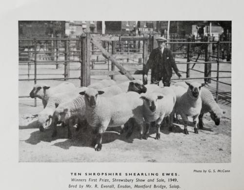 Shropshire Sheep, Shropshire history, Shrewsbury, Montford Bridge,