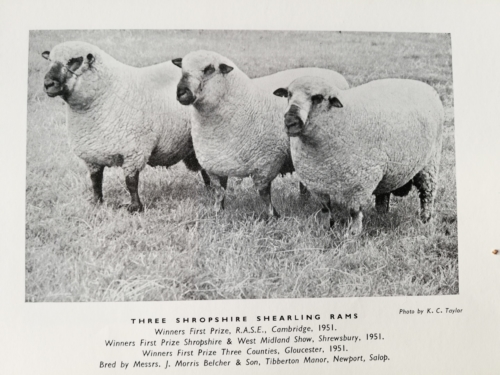 Shropshire sheep, 1951 prize winers, Shropshire history