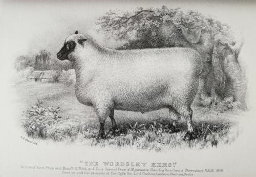 Shropshire sheep, Shropshire ram, 1884 painting